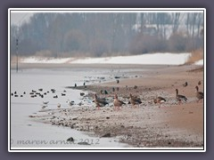 Winter an der Weser